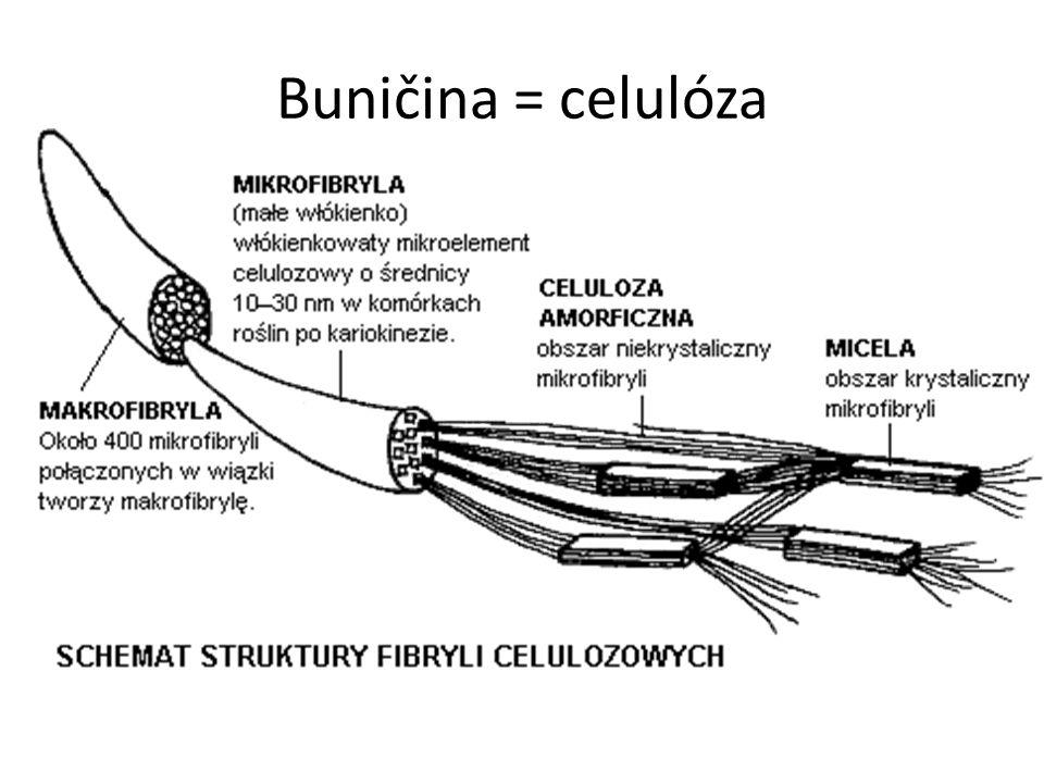 Buničina = celulóza