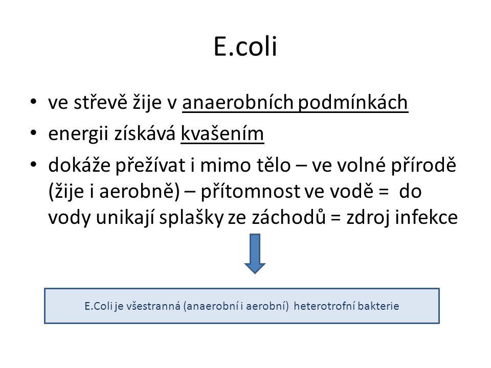 Coli • ve střevě žije v anaerobních podmínkách • energii