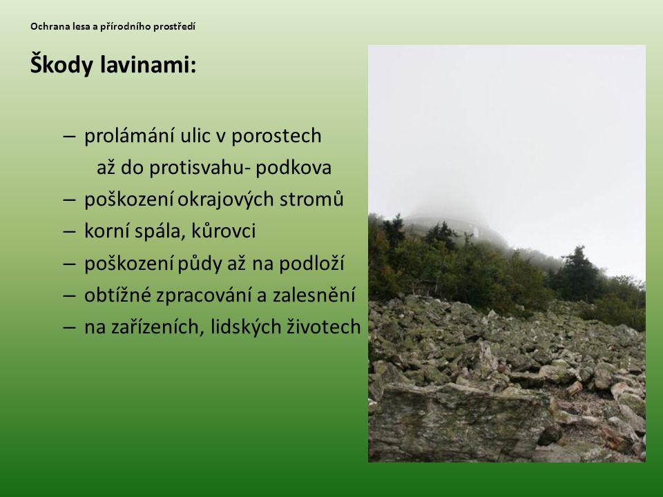 Ochrana lesa a přírodního prostředí Škody lavinami: – prolámání ulic v porostech až do protisvahu- podkova – poškození okrajových stromů – korní spála