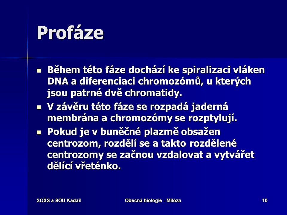 SOŠS a SOU KadaňObecná biologie - Mitóza11 Profáze