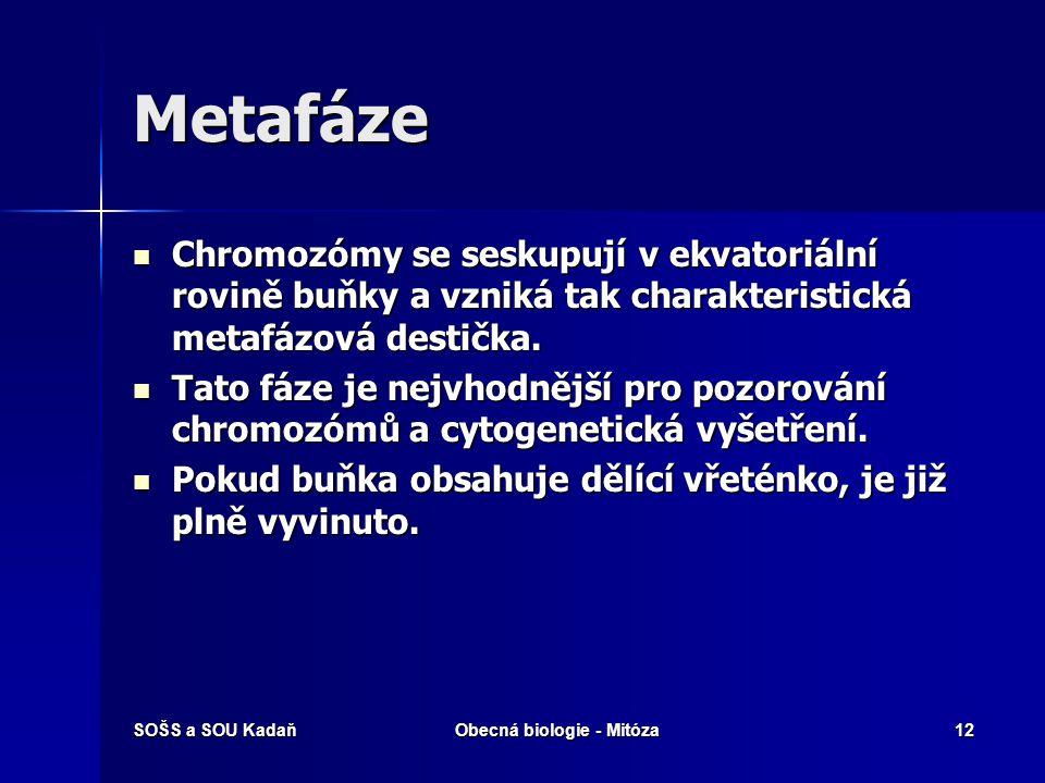 SOŠS a SOU KadaňObecná biologie - Mitóza13 Metafáze