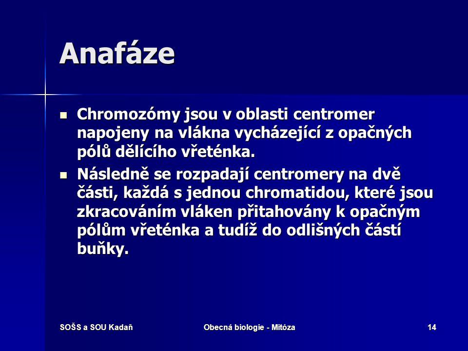 SOŠS a SOU KadaňObecná biologie - Mitóza15 Anafáze