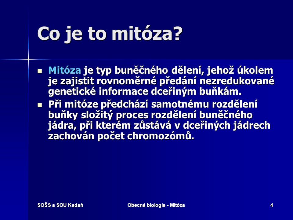 SOŠS a SOU KadaňObecná biologie - Mitóza5 Chromozomy Pohlavní chromozomy X a Y Chromozom