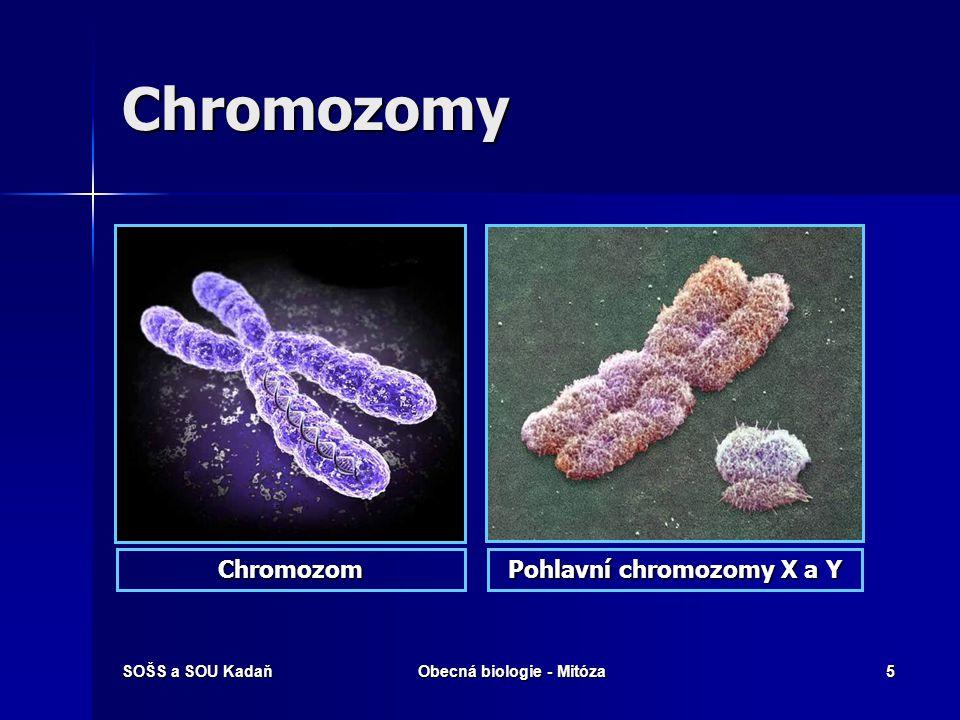 SOŠS a SOU KadaňObecná biologie - Mitóza6 Stavba chromozómu