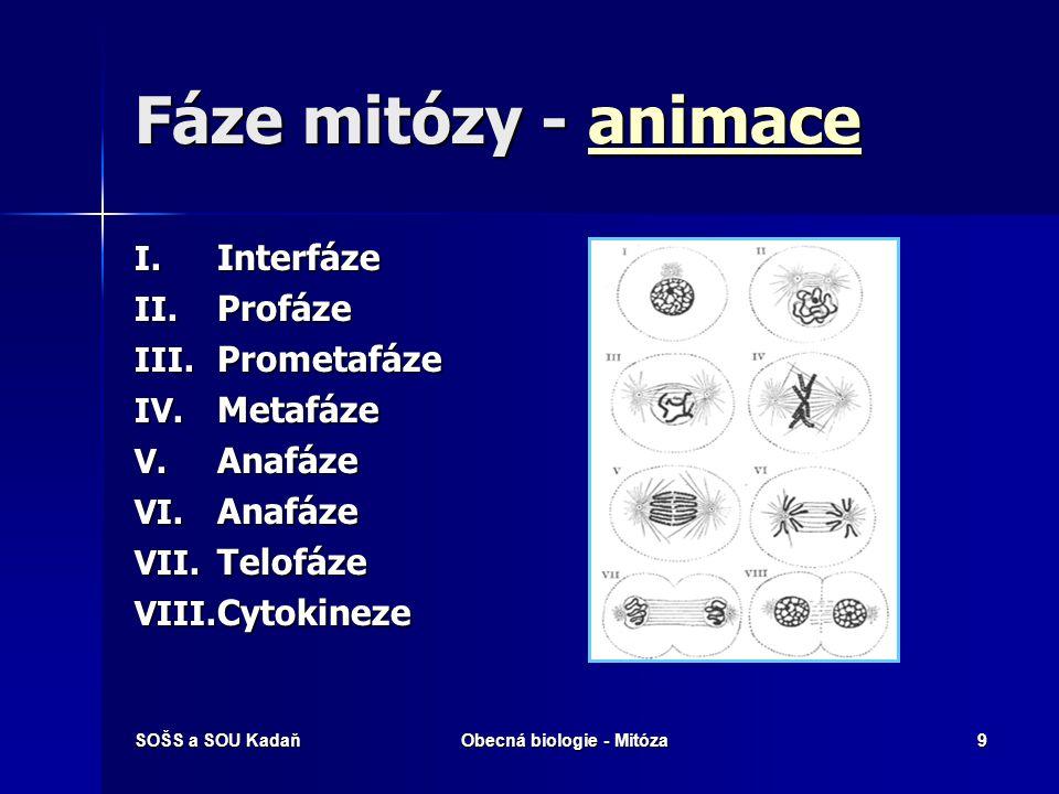 SOŠS a SOU KadaňObecná biologie - Mitóza10 Profáze  Během této fáze dochází ke spiralizaci vláken DNA a diferenciaci chromozómů, u kterých jsou patrné dvě chromatidy.