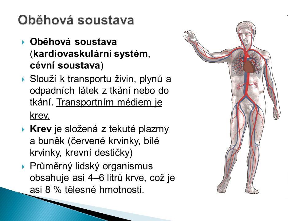  Oběhová soustava (kardiovaskulární systém, cévní soustava)  Slouží k transportu živin, plynů a odpadních látek z tkání nebo do tkání. Transportním