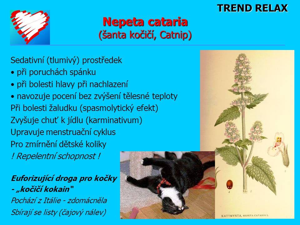TREND RELAX Nepeta cataria (šanta kočičí, Catnip) Sedativní (tlumivý) prostředek • při poruchách spánku • při bolesti hlavy při nachlazení • navozuje