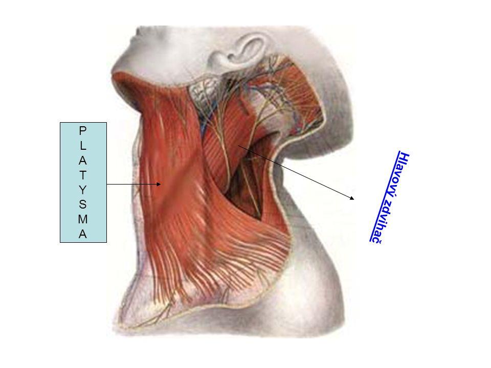 PLATYSMAPLATYSMA Hlavový zdvihač