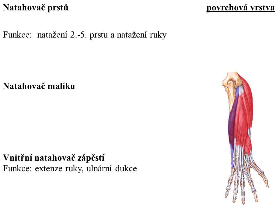 Funkce: natažení 2.-5. prstu a natažení ruky Natahovač prstů Natahovač malíku Funkce: extenze ruky, ulnární dukce Vnitřní natahovač zápěstí povrchová