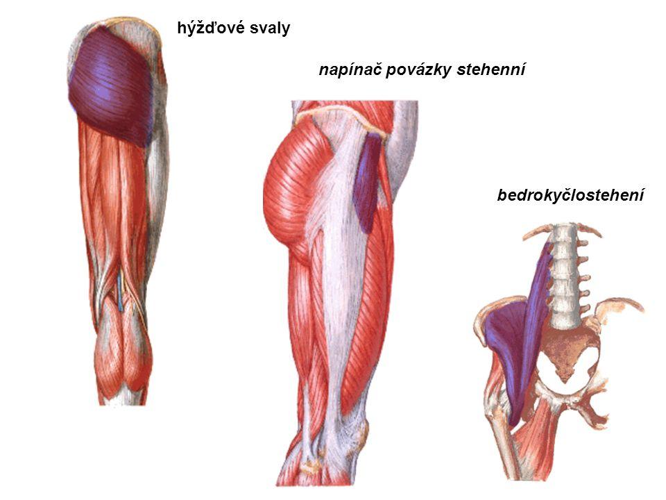 hýžďové svaly bedrokyčlostehení napínač povázky stehenní
