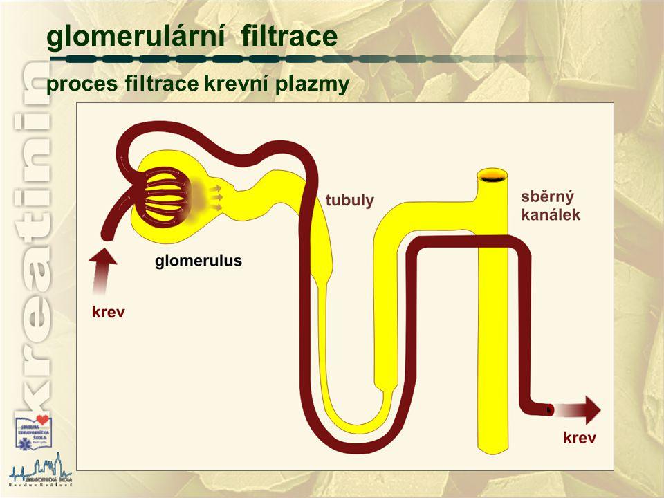 glomerulární filtrace proces filtrace krevní plazmy