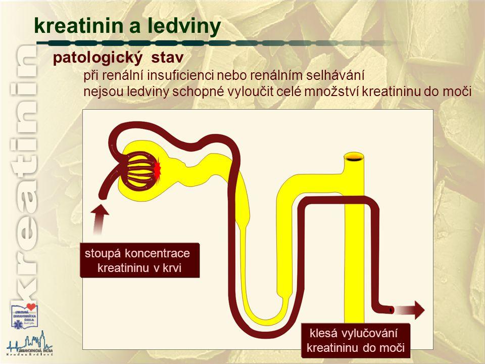 při renální insuficienci nebo renálním selhávání nejsou ledviny schopné vyloučit celé množství kreatininu do moči kreatinin a ledviny patologický stav