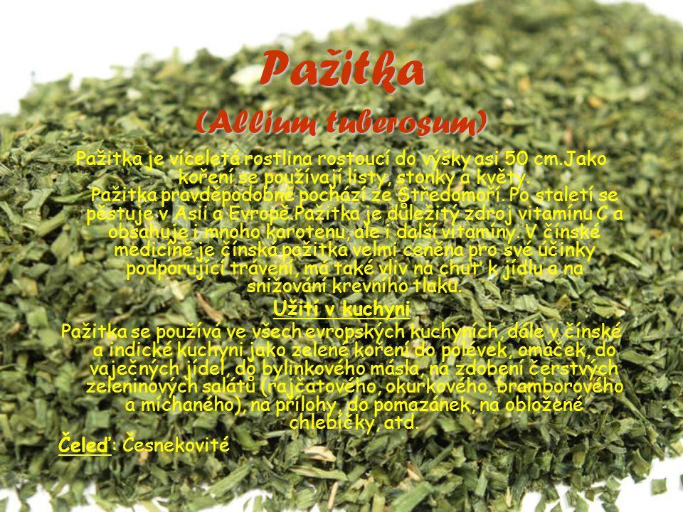 Pažitka (Allium tuberosum) Pažitka je víceletá rostlina rostoucí do výšky asi 50 cm.Jako koření se používají listy, stonky a květy.