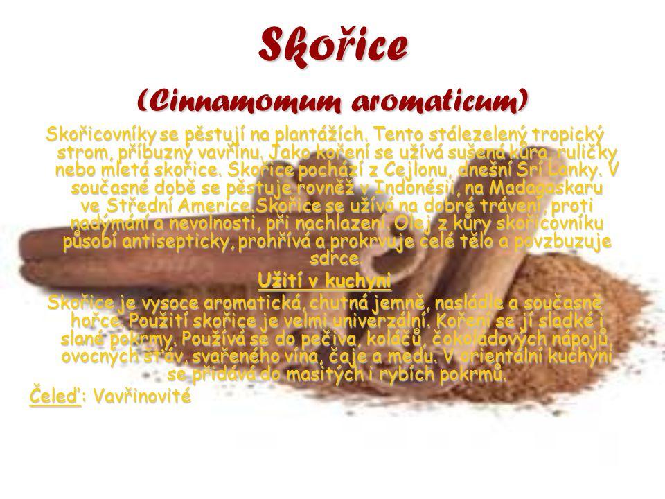 Skořice (Cinnamomum aromaticum) Skořicovníky se pěstují na plantážích. Tento stálezelený tropický strom, příbuzný vavřínu. Jako koření se užívá sušená