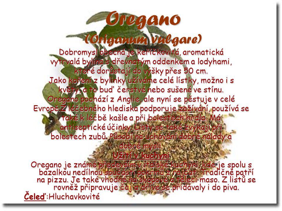 Oregano (Origanum vulgare) Dobromysl obecná je keříčkovitá, aromatická vytrvalá bylina s dřevnatým oddenkem a lodyhami, které dorůstají do výšky přes