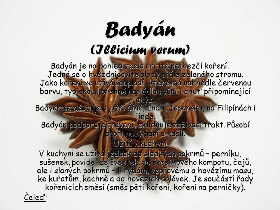 Badyán (Illicium verum) Badyán je na pohled zcela určitě nejhezčí koření. Jedná se o hvězdnicovité plody stále zeleného stromu. Jako koření se užívá s