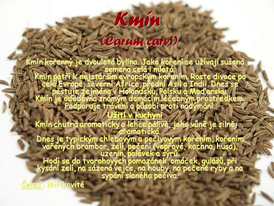 Kmín (Carum carvi) Kmín kořenný je dvouletá bylina.