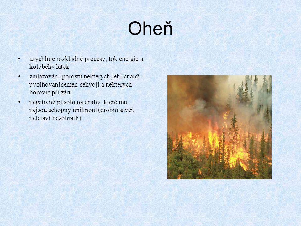 Oheň •urychluje rozkladné procesy, tok energie a koloběhy látek •zmlazování porostů některých jehličnanů – uvolňování semen sekvojí a některých borovi