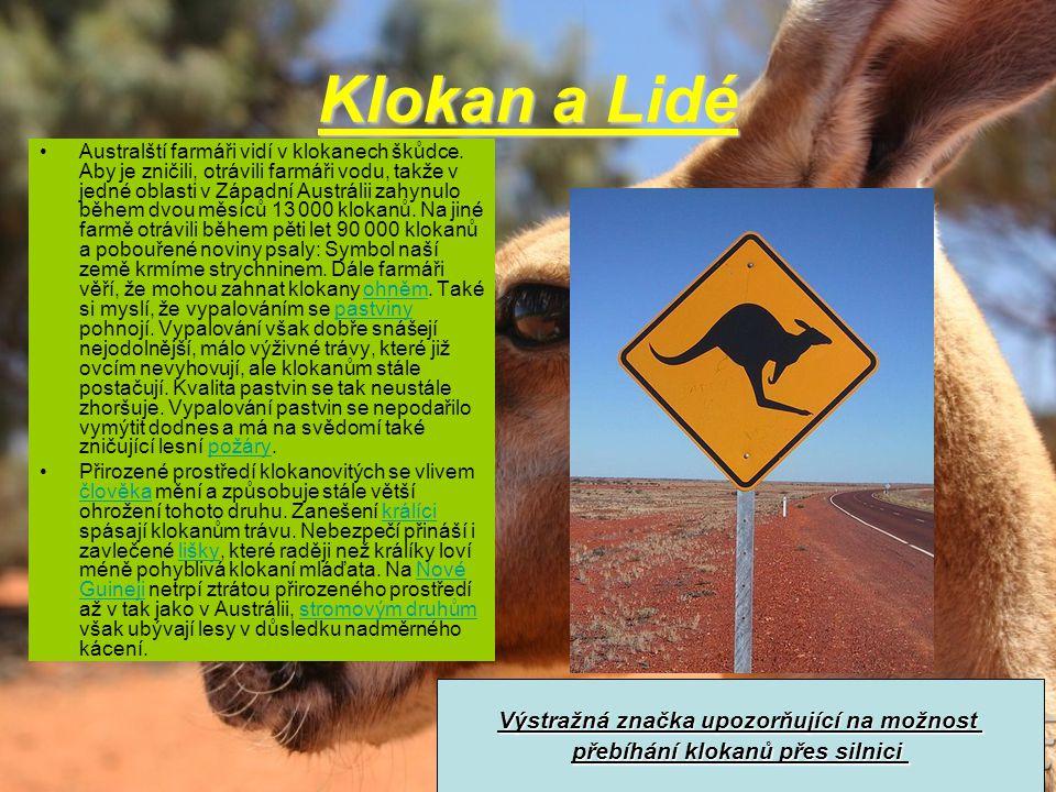 Klokan a Lidé •Australští farmáři vidí v klokanech škůdce. Aby je zničili, otrávili farmáři vodu, takže v jedné oblasti v Západní Austrálii zahynulo b