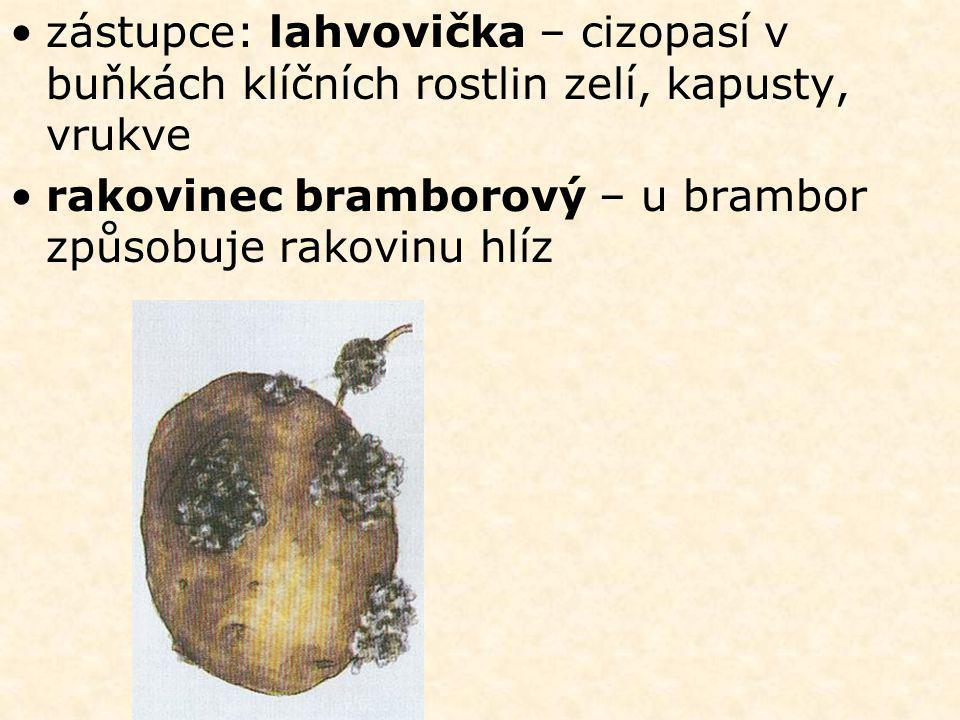 •zástupce: lahvovička – cizopasí v buňkách klíčních rostlin zelí, kapusty, vrukve •rakovinec bramborový – u brambor způsobuje rakovinu hlíz