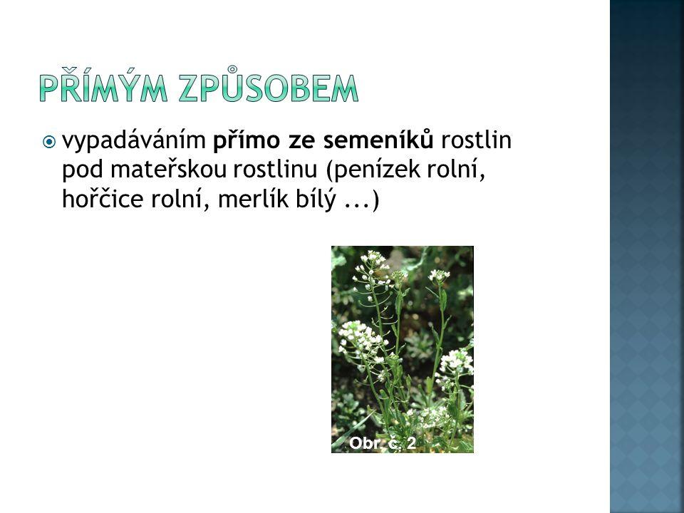 lusky hrachorů a vikví se při dozrávání prudce zkrucují a vymršťují semena do okolí,  u plevelných máků při rozkývání rostlin větrem, nářadím apod.