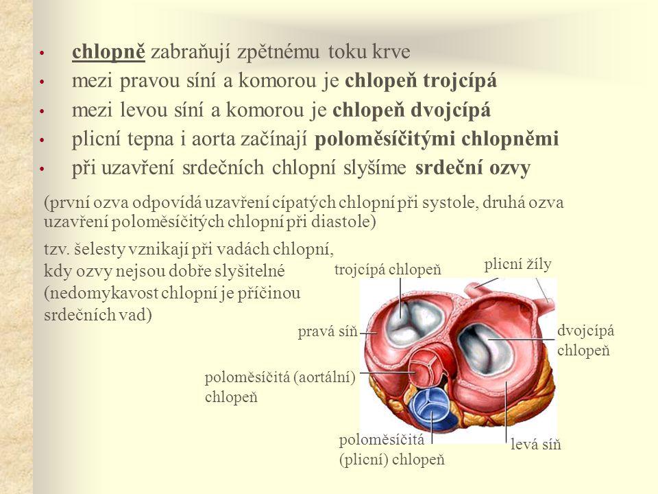 • chlopně zabraňují zpětnému toku krve • mezi pravou síní a komorou je chlopeň trojcípá • mezi levou síní a komorou je chlopeň dvojcípá • plicní tepna i aorta začínají poloměsíčitými chlopněmi • při uzavření srdečních chlopní slyšíme srdeční ozvy tzv.