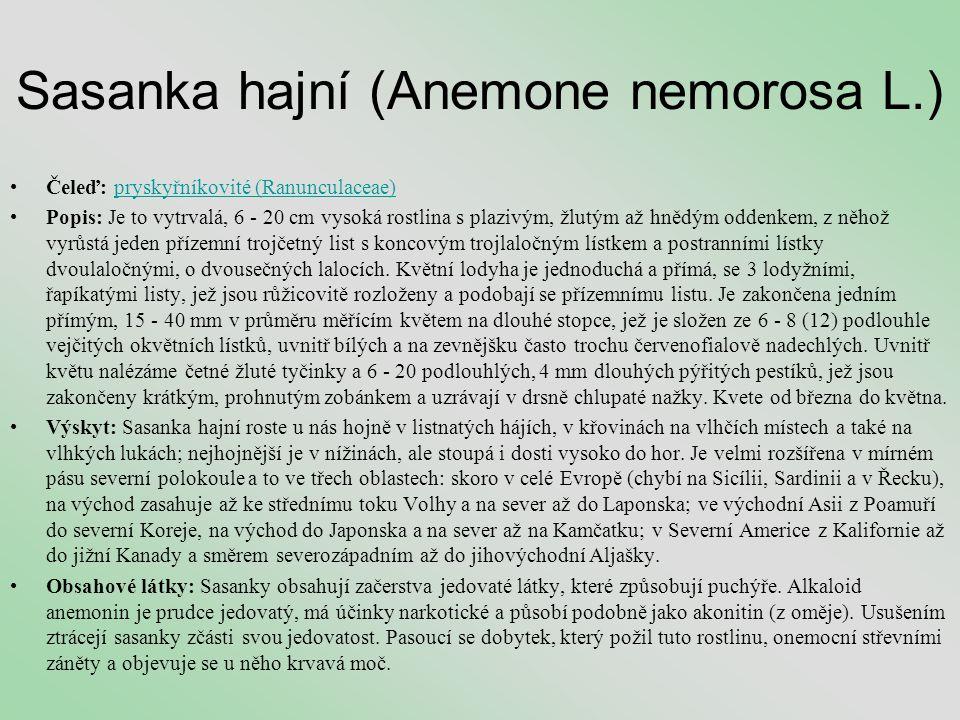 Sasanka hajní (Anemone nemorosa L.) •Čeleď: pryskyřníkovité (Ranunculaceae)pryskyřníkovité (Ranunculaceae) •Popis: Je to vytrvalá, 6 - 20 cm vysoká ro
