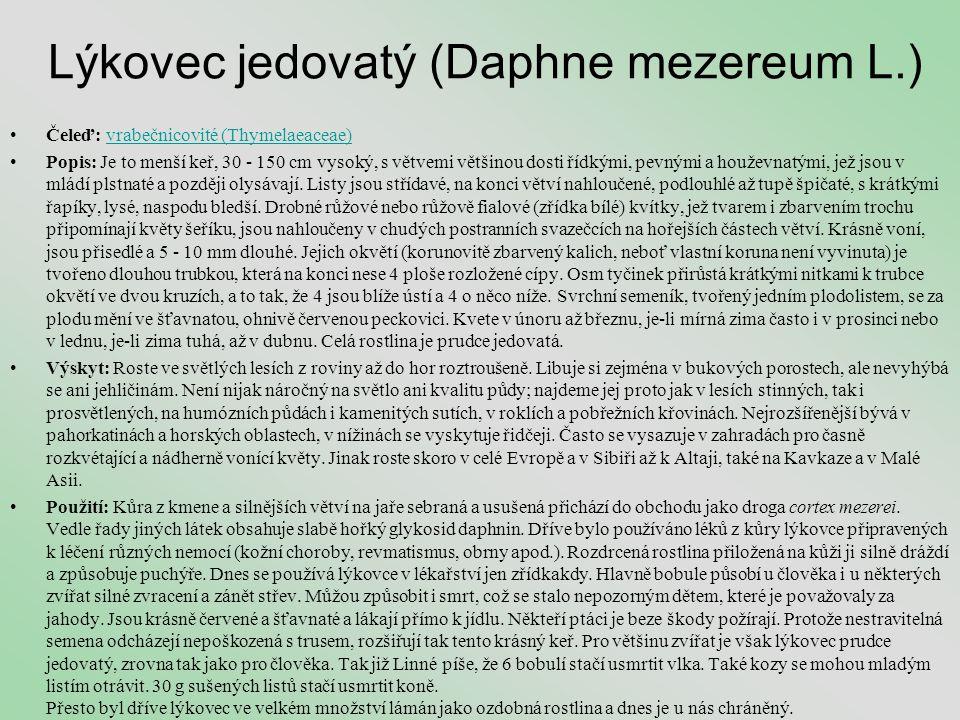 Lýkovec jedovatý (Daphne mezereum L.) •Čeleď: vrabečnicovité (Thymelaeaceae)vrabečnicovité (Thymelaeaceae) •Popis: Je to menší keř, 30 - 150 cm vysoký
