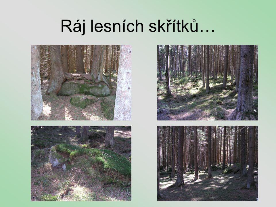Ráj lesních skřítků…