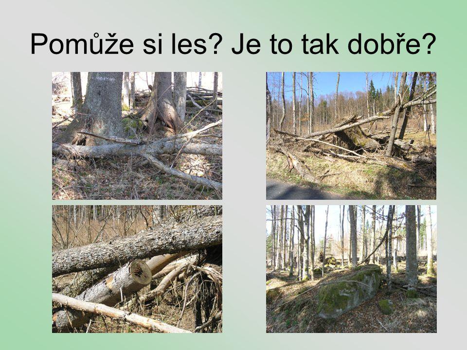 Pomůže si les? Je to tak dobře?