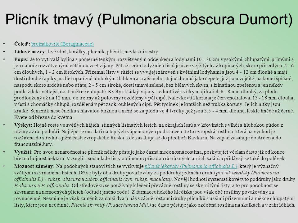 Plicník tmavý (Pulmonaria obscura Dumort) •Čeleď: brutnákovité (Boraginaceae)brutnákovité (Boraginaceae) •Lidové názvy: hvězdoš, korálky, plucník, pli