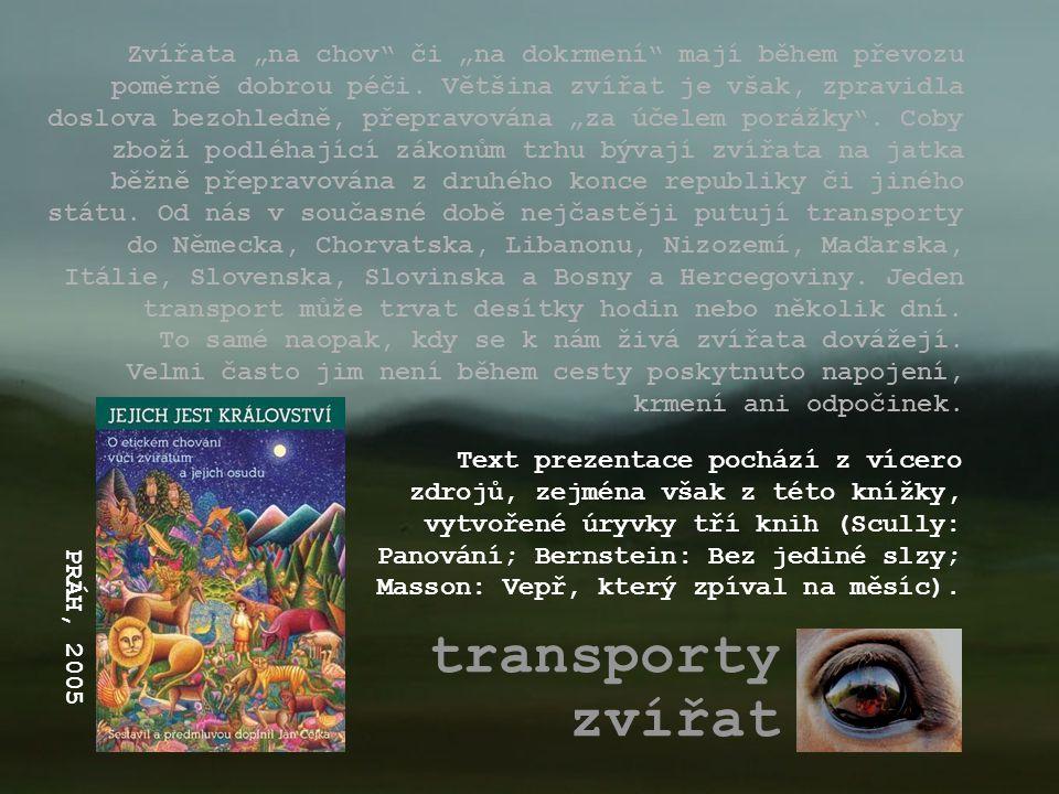 """transporty zvířat Zvířata """"na chov"""" či """"na dokrmení"""" mají během převozu poměrně dobrou péči. Většina zvířat je však, zpravidla doslova bezohledně, pře"""