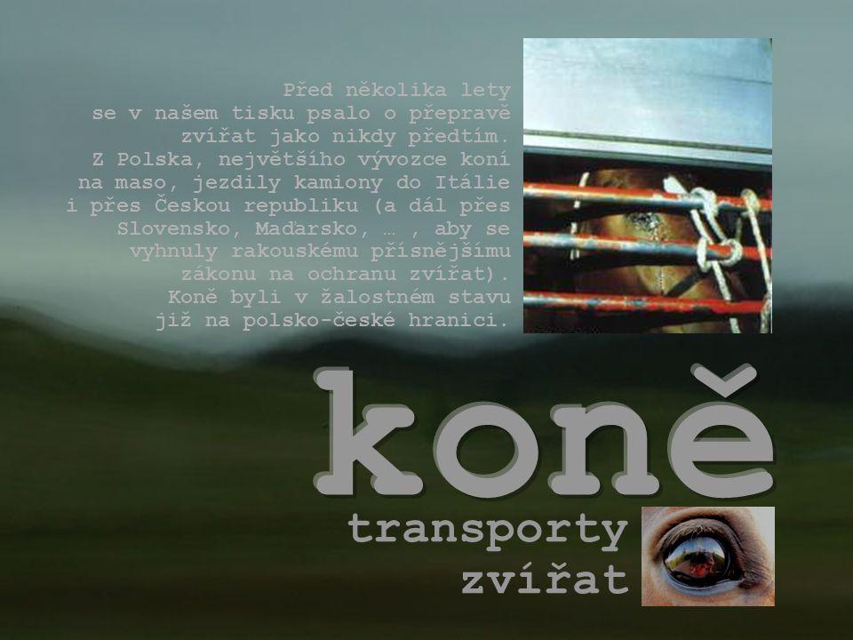 transporty zvířat Před několika lety se v našem tisku psalo o přepravě zvířat jako nikdy předtím.