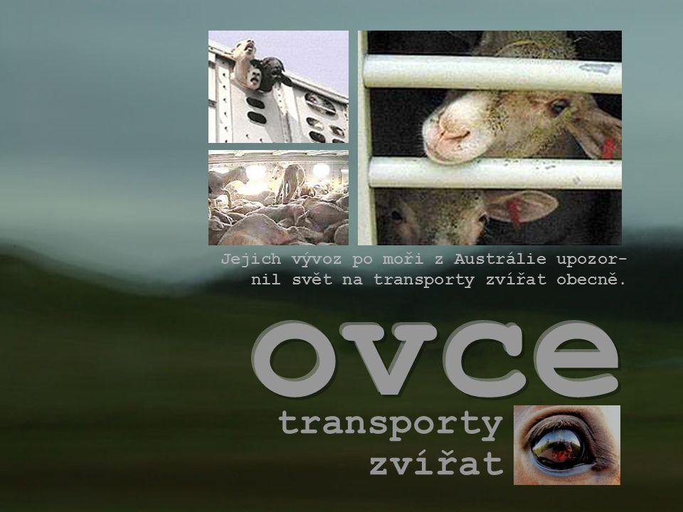 transporty zvířat Jejich vývoz po moři z Austrálie upozor- nil svět na transporty zvířat obecně.