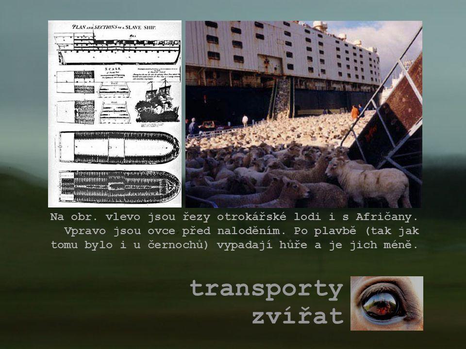 transporty zvířat Na obr. vlevo jsou řezy otrokářské lodi i s Afričany. Vpravo jsou ovce před naloděním. Po plavbě (tak jak tomu bylo i u černochů) vy