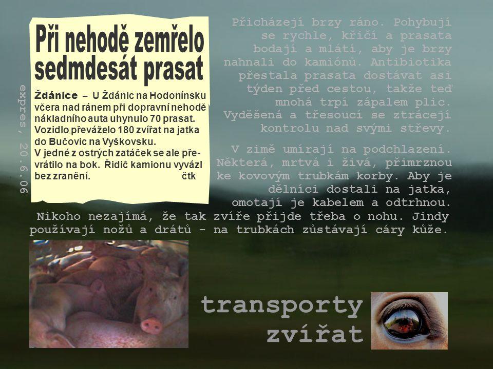 transporty zvířat Ždánice – U Ždánic na Hodonínsku včera nad ránem při dopravní nehodě nákladního auta uhynulo 70 prasat. Vozidlo převáželo 180 zvířat