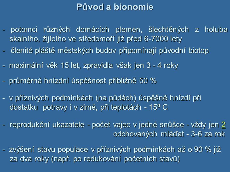 Původ a bionomie -potomci různých domácích plemen, šlechtěných z holuba skalního, žijícího ve středomoří již před 6-7000 lety - potomci různých domácí