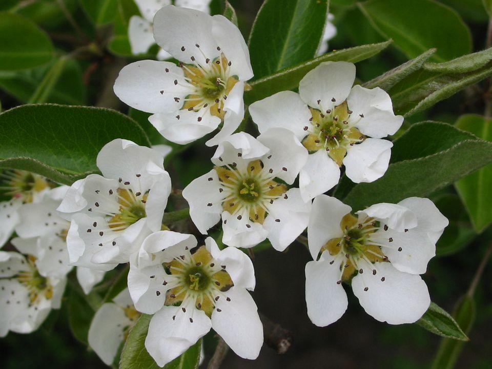 •O•Otázky na závěr: 1) Pomocí čeho se mohou rostliny rozmnožovat.