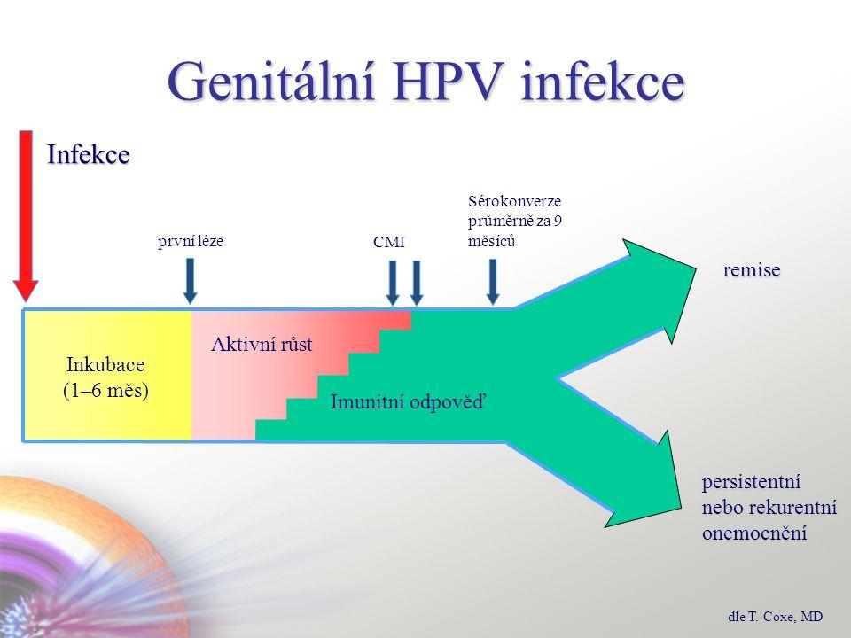 Genitální HPV infekce persistentní nebo rekurentní onemocnění Inkubace (1–6 měs) Imunitní odpověď Aktivní růst remise první léze Infekce CMI Sérokonverze průměrně za 9 měsíců dle T.
