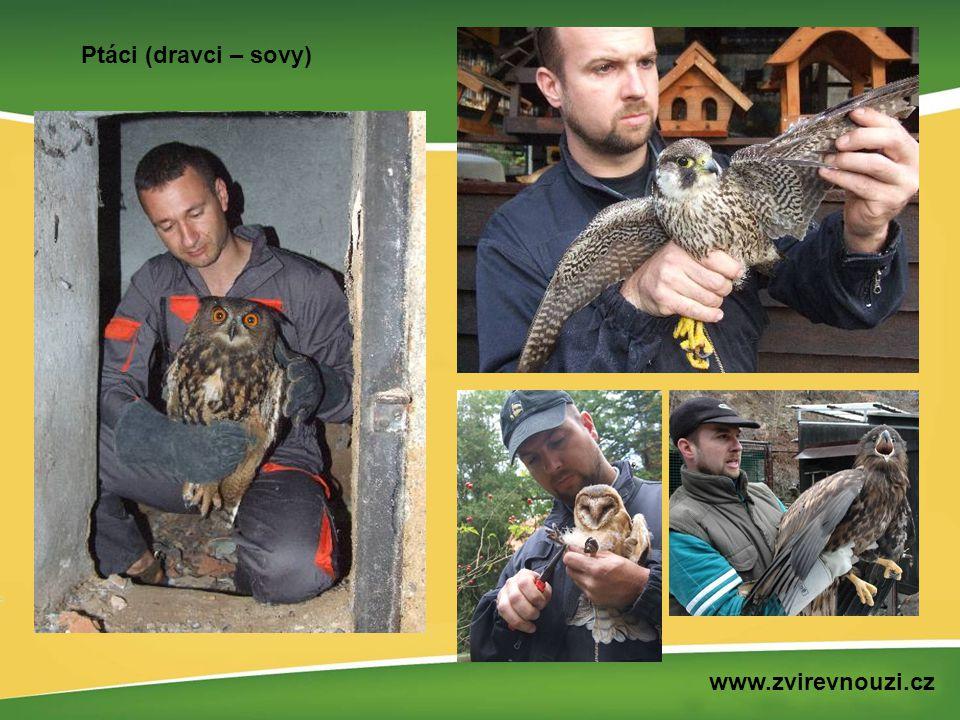 Ptáci (dravci – sovy) www.zvirevnouzi.cz