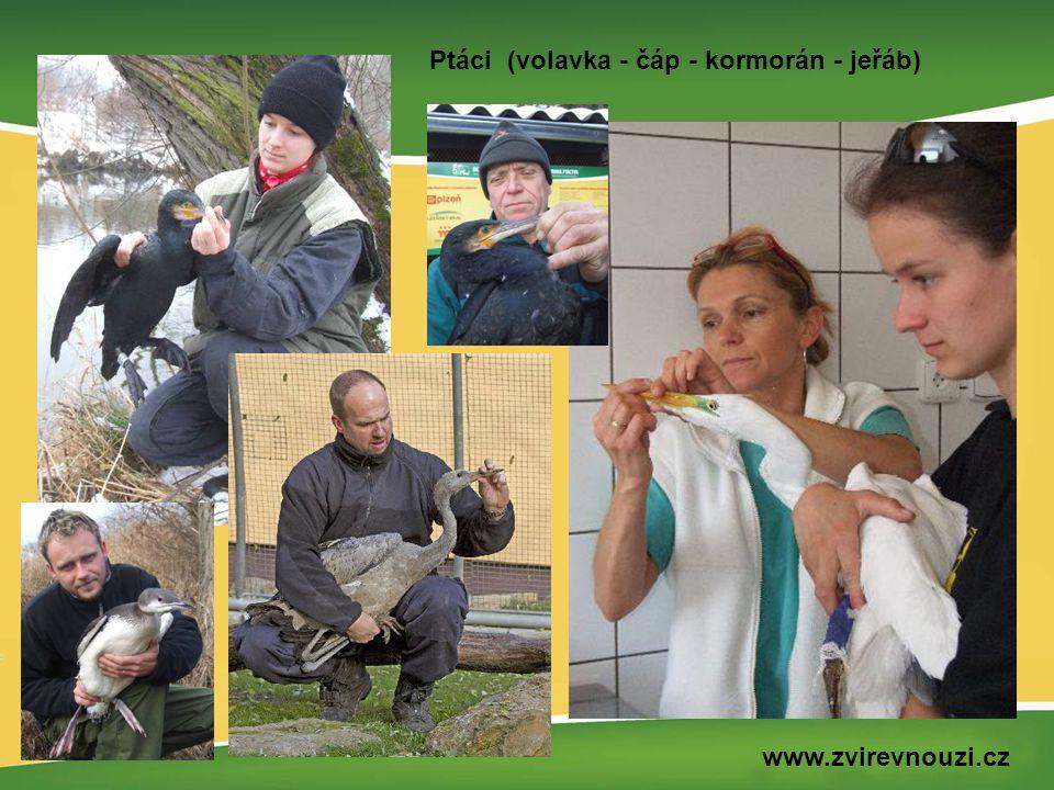 Ptáci (volavka - čáp - kormorán - jeřáb) www.zvirevnouzi.cz