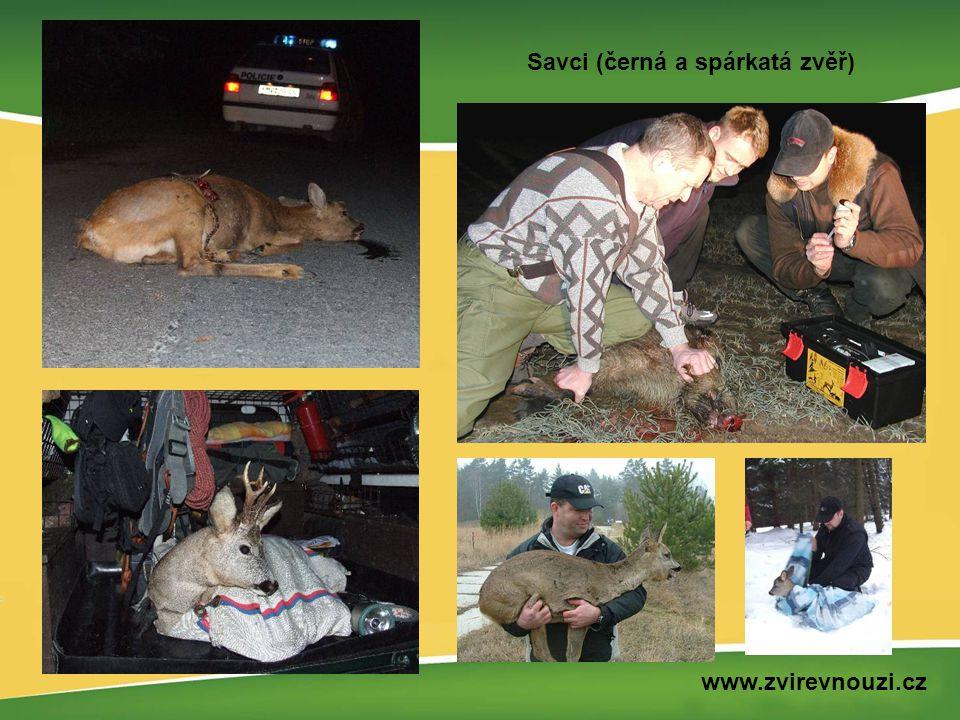 Savci (černá a spárkatá zvěř) www.zvirevnouzi.cz