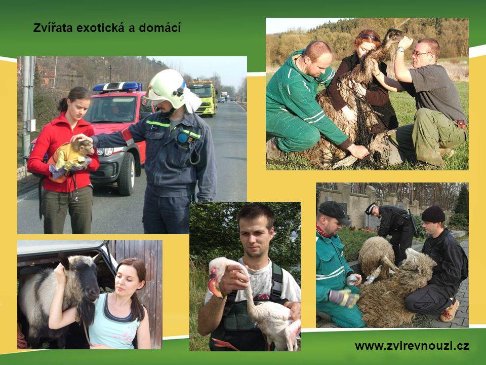 Zvířata exotická a domácí www.zvirevnouzi.cz