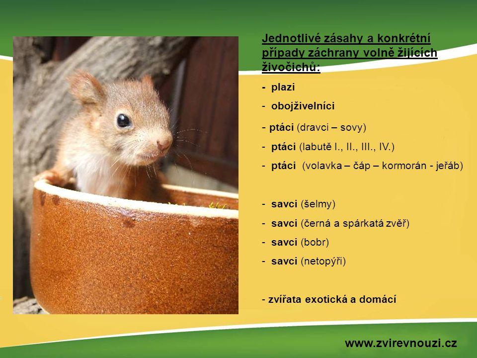 Jednotlivé zásahy a konkrétní případy záchrany volně žijících živočichů: - plazi - obojživelníci - ptáci (dravci – sovy) - ptáci (labutě I., II., III.
