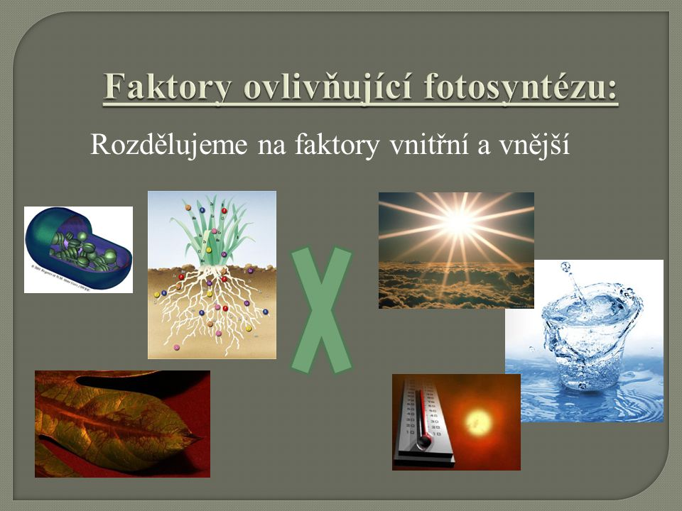 Faktory ovlivňující fotosyntézu: Faktory ovlivňující fotosyntézu: Rozdělujeme na faktory vnitřní a vnější
