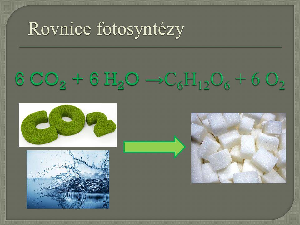 Rovnice fotosyntézy