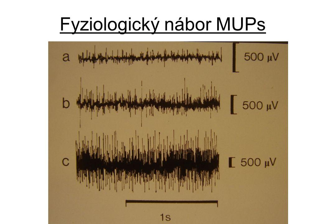 Měření rychlosti vedení •Architektura fasciklů periferního nervu • stimulaci v oblasti lokte • stimulace v zápěstí • snímání na (hypo)thenaru povrchovými elektrodami • motorRV = vzdálenost/rozdíl latencí •Závislost RV na průměru axonu •Závislost RV na věku