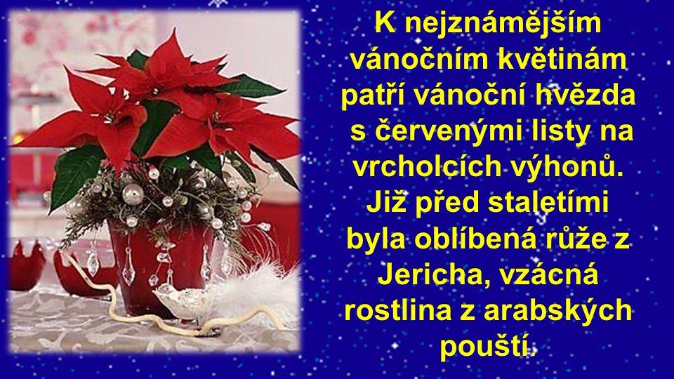 K nejznámějším vánočním květinám patří vánoční hvězda s červenými listy na vrcholcích výhonů.