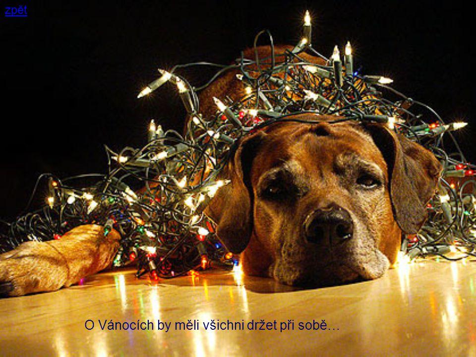 O Vánocích by měli všichni držet při sobě… zpět
