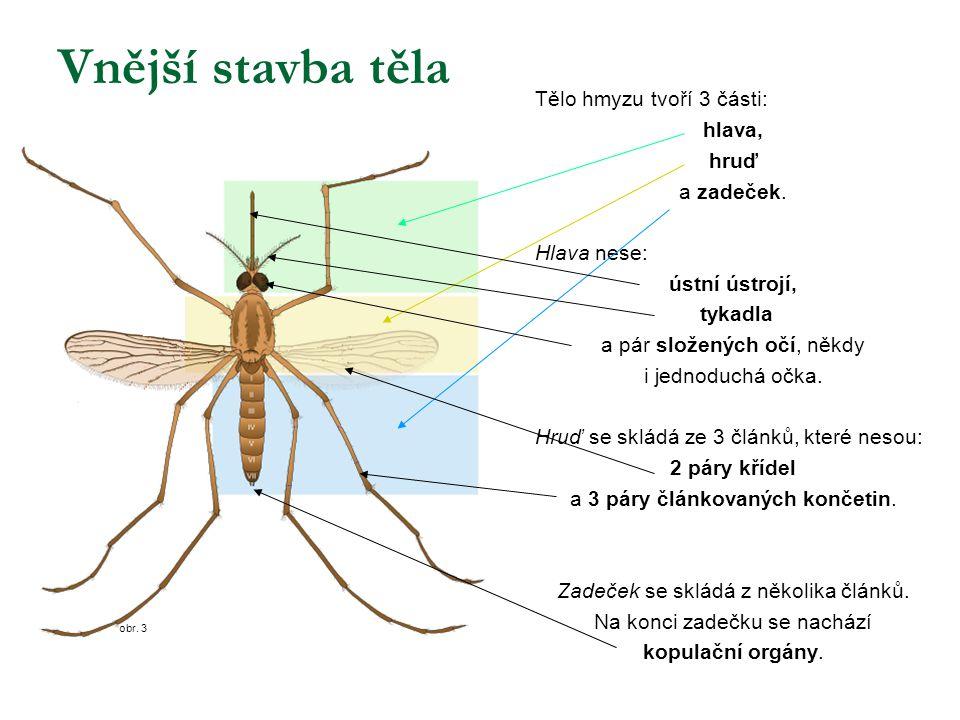 obr. 3 Vnější stavba těla Tělo hmyzu tvoří 3 části: hlava, hruď a zadeček. Hlava nese: ústní ústrojí, tykadla a pár složených očí, někdy i jednoduchá